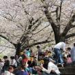 桜の下と上