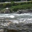 10月14日 亀尾島川・長良川で終盤の鮎釣り!