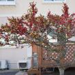 秋の花、紅葉