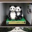 人生初でパンダを見たぞ。