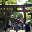 ツツジ満開の根津神社