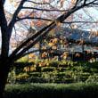 足立区 都市農業公園の紅葉・・3