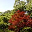 須磨離宮公園の園内で・・・