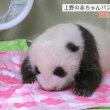 ゾウガメ50万円パンダ赤ちゃん1000万円