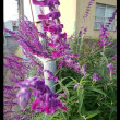 久しぶりのウォーキングと街中の花の記事です。