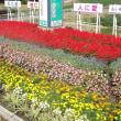 秋花壇 H29-09-16 ㈯ 曇