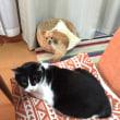 犬と猫と、飽きない日々