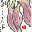 絵手紙:タカサゴユリ・ミョウガ