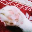 2月22日(木)のつぶやき 2月22日 猫の日 #猫の日 #ネコの日 #ねこの日 #白猫 #肉球 株式会社セルビーニャ 株式会社AD-CREATEmeowwwww 企業公式Twitter 猫仕様