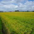 水稲損害評価(し皆調査)及び検見協議会に参加