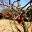 冬晴れの梅ヶ枝公園 ・・・ 愛知県一宮市