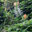 岩場に咲く植物~