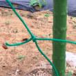 小玉スイカの害虫対策