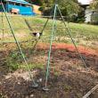 クコの木の植付けとラズベリーとブラックベリーの剪定