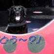 いざ・・!「 直島 」へ~♪(本村エリア編)