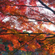 晩秋の京都に行く