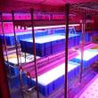 室内水耕栽培59 (H29.12.10~)