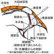 膝OAに対する針灸臨床 Ver.2.0