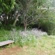 薔薇の園  * 2017 *  Vol.61 * 木陰のベンチで一休み *