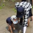 田植え体験募集中‼ IN和歌山県あらぎの里