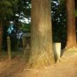 福島県喜多方市、大田賀地神社のケヤキです!!
