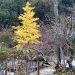 今年の秋は・・・。
