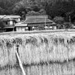 茅葺民家 モノクロ 稲架のある風景