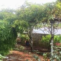 数年前の庭木の今