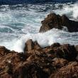 鎌手海岸の岩場の植物