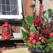 クリスマスアレンジ・・・(物置の前庭で) ☆画角、絞りを変えて撮り比べてみました。