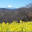 吾妻山公園から』富士山と菜の花を望む