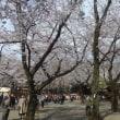 お花見散歩 市ヶ谷