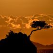 中林海岸 日の出