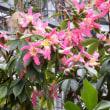 冬の「咲くやこの花館」