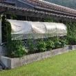 家庭菜園の畑の様子