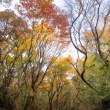 標高差で楽しむ!秋