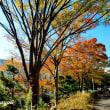 座間「大坂台公園」紅くそして黄色く染まる
