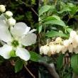 白い花が咲く頃に