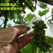 山梨県・笛吹農園へ(後編)-2017バイク旅Vol.1