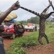 コンゴ民主共和国でエボラ発生!した場所を考察してみた