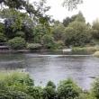 柿田川湧水の地に遊ぶ