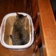 洗濯カゴとネコ