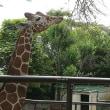 横浜 野毛山動物園