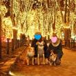 犬ばか 光のページェント 2017