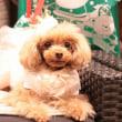 クリスマス愛犬ヴィレッジ☆