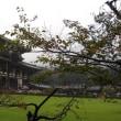 東大寺のお茶会へ。