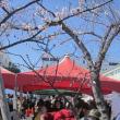 アーモンド フェスティバルに行ってきました。