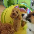 太らないように注意しようね!  犬のしつけ教室@アロハドギー