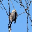昨日の鳥 昨日は3種類 を撮影して来ましたが枚数が多くなるので3回に分けて掲載します,最後です。