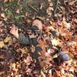 12月のとある日、落ち葉の布団ではしゃぐ孫